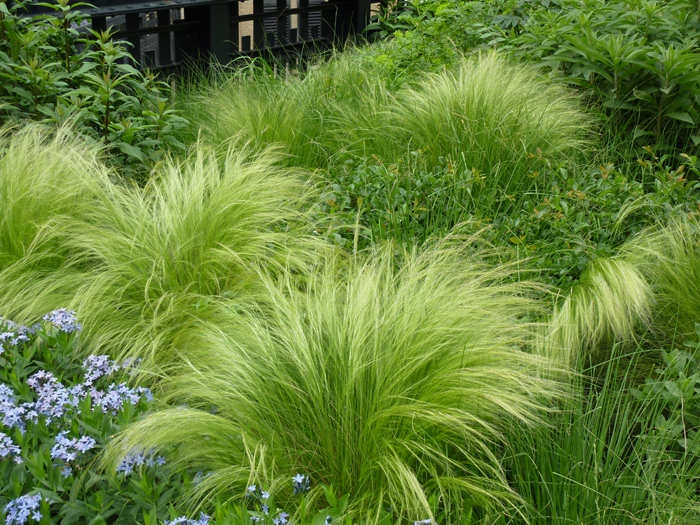 20 drought tolerant plants for your low maintenance garden for Low maintenance grass plants
